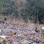 Odpadky - nielen estetický problém obce Bošáca
