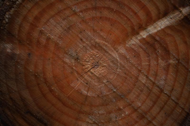 Ľudská duša sa podobá na letokruhy stromu.