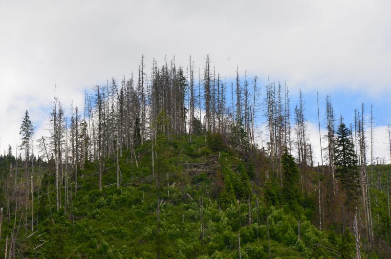 Chorý les