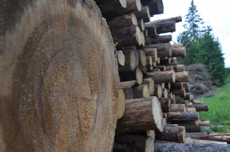 Lesná skládka